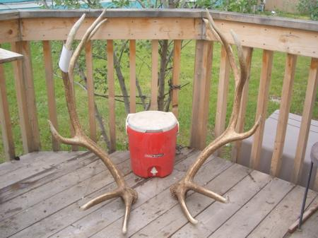 large elk shed